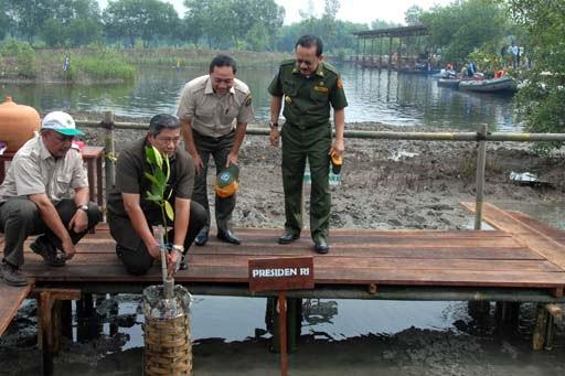 Indonesischer President pflanzt Symbolisch eine Mangrove Foto-Quelle: Jakarta Post