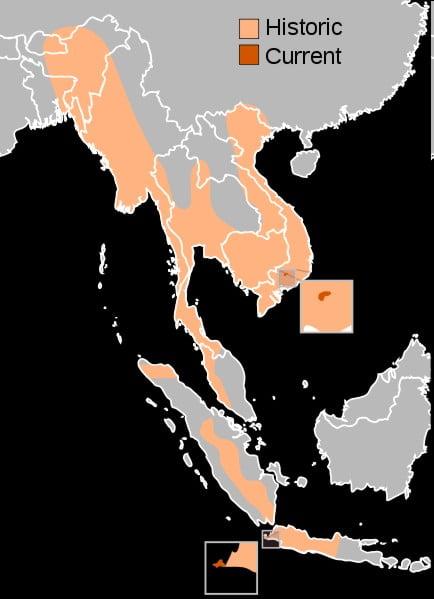Ausbreitungsgebiet des Java-Nashorn´s Historisch und Heute