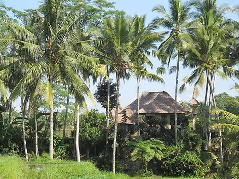 An diesem romantischen Ort in Bentuyung bei Ubud wurde gedreht Foto-Quelle: focus.de
