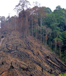 Sumatra hat seit 1985 die Hälfte seiner Tropenwälder verloren, über 13 Millionen Hektar. © Fletcher & Baylis / WWF-Indonesia Fotoquelle: wwf.de