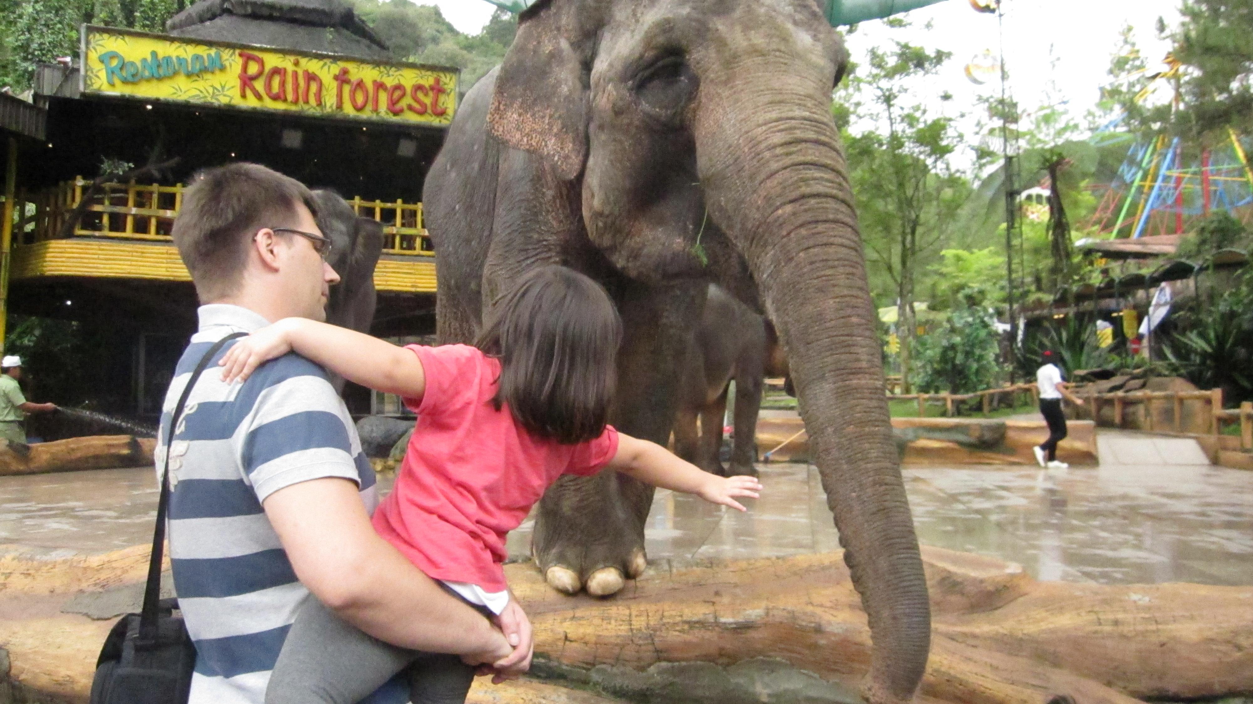 Wir bei den Elefanten