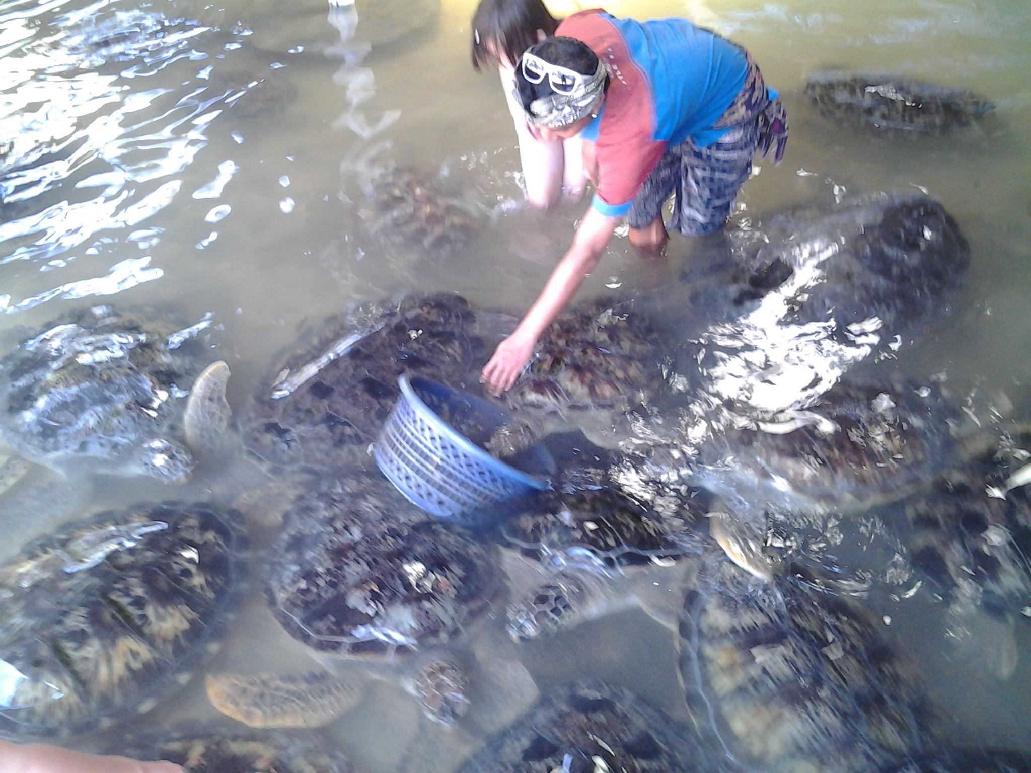 Sarah beim füttern von Schildkröten
