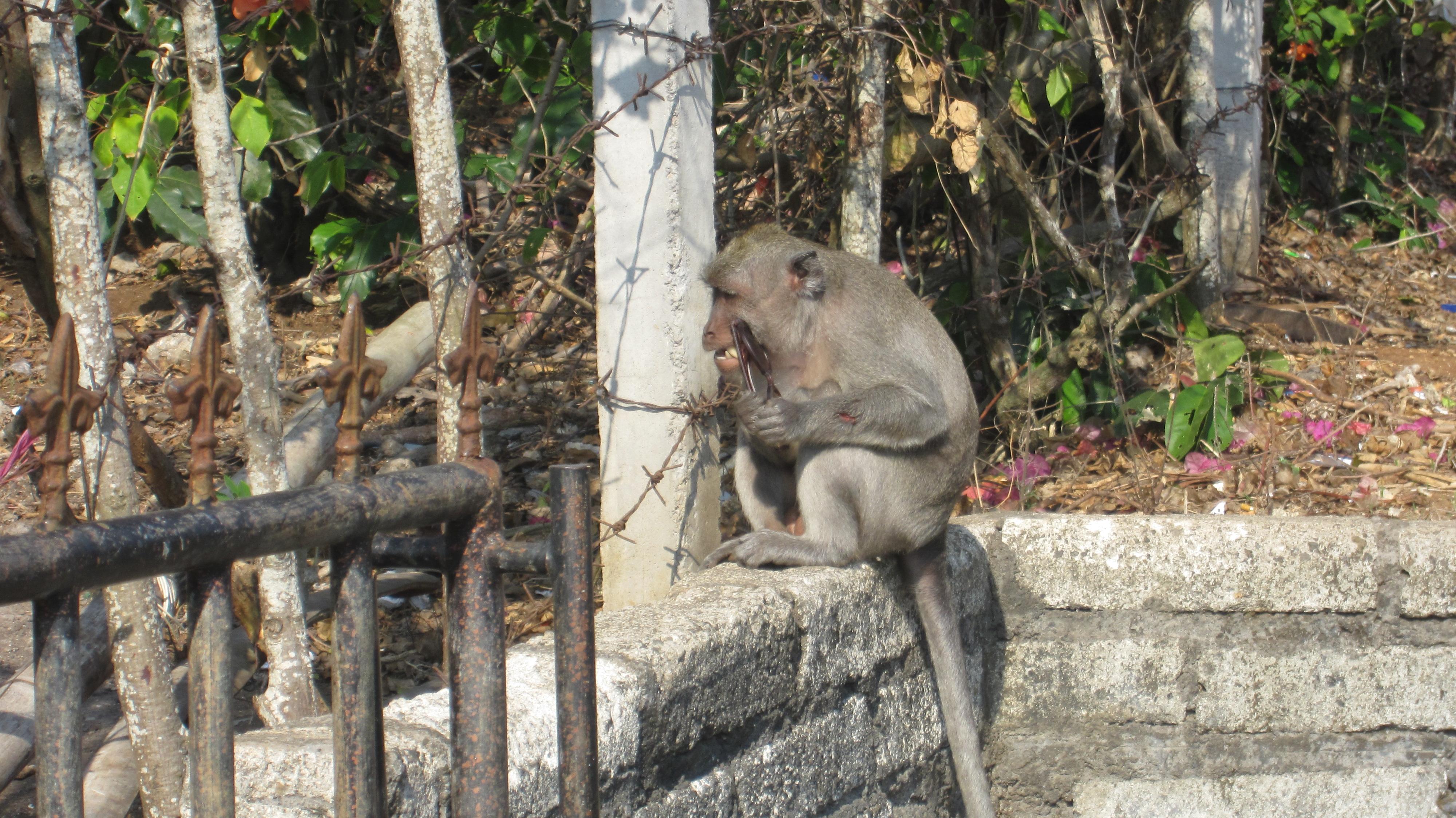 Da hatte jemand nicht sich die Warnungen durch gelessen *lol*. Der Affe hatte die Frau von hinten angesprungen und die Brille geklaut!