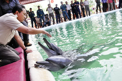 Zwei gefangene Delphine im Dolphin Bay Restaurant Foto: kompas.com