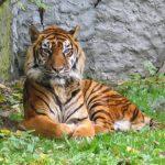Wildtiere in Indonesien in Privater Gefangenschaft