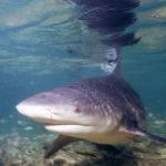 Hai griff US-Surfer auf Bali an