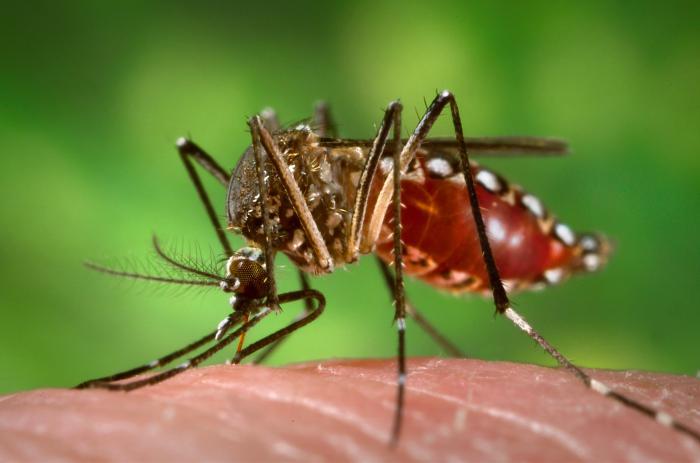 Der Kampf gegen das Dengue Fieber