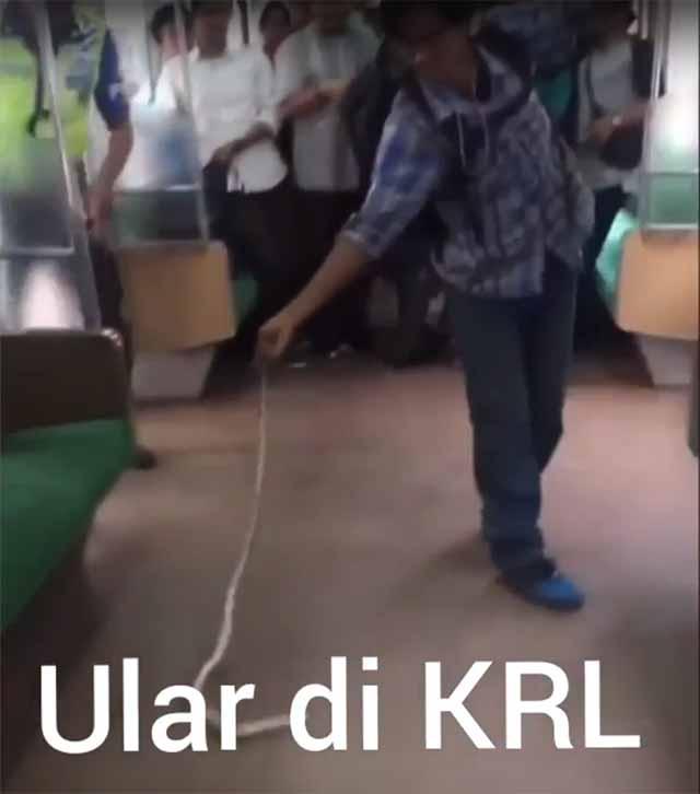 Schlange im Zug gefunden / Schreenshot: Youtube