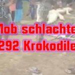 Mob schlachtet 292 Krokodile